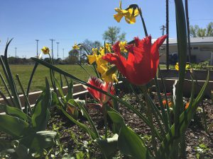 Community Garden at Nesmith Park