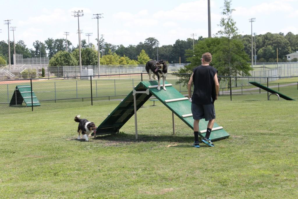 dog park (1)