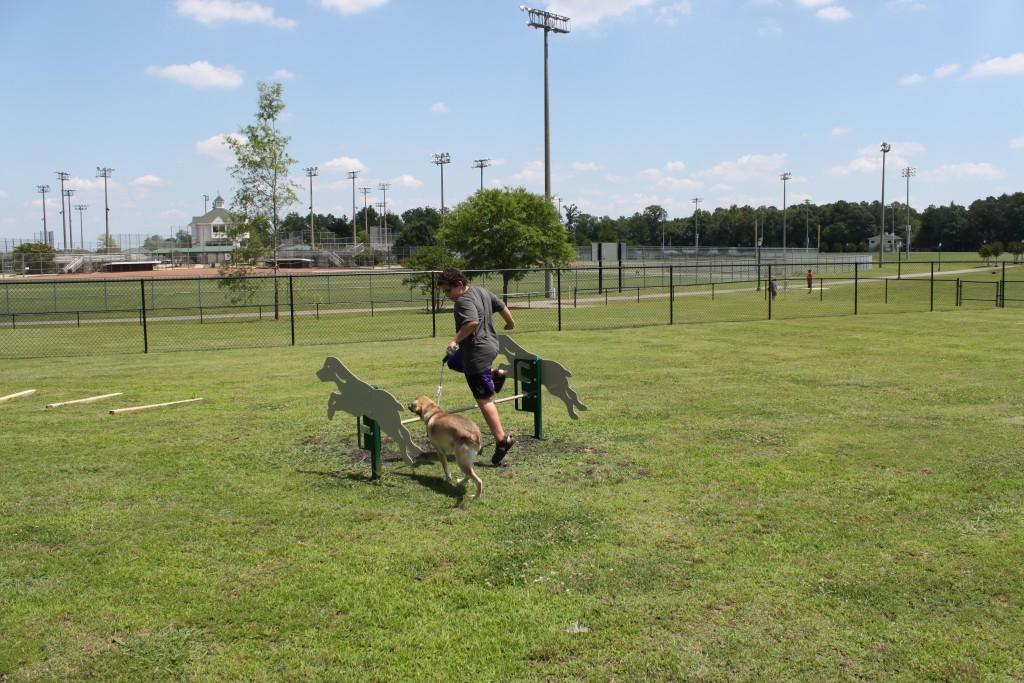 dog park (2)